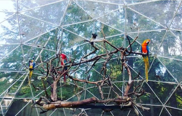 Megawrap Inc. | All Parrot Rescue